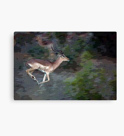 Impala On The Run Canvas Print