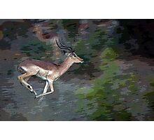 Impala On The Run Photographic Print
