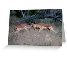 Impala Rutting  Greeting Card