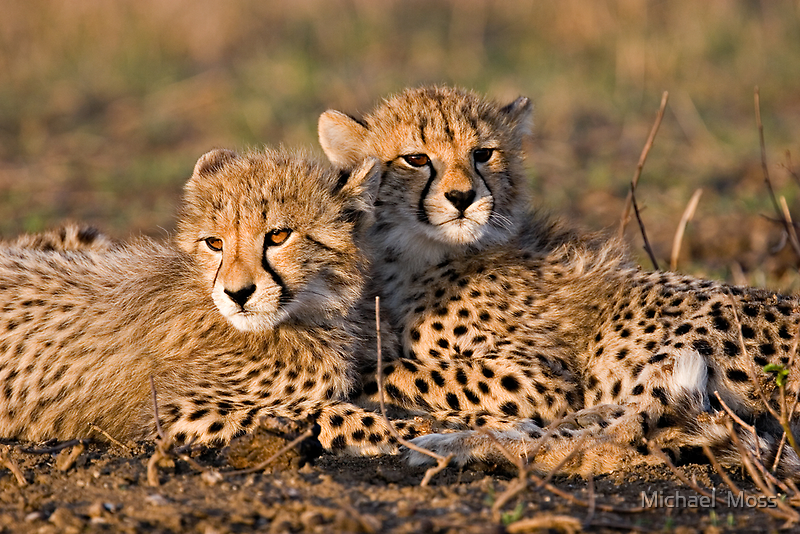 Brothers  by Michael  Moss