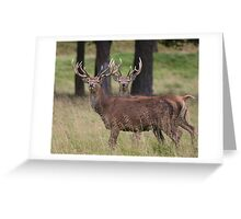 Stag Night Greeting Card