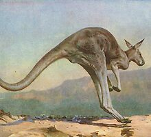 Great Grey Kangaroo leaping circa 1900 by artfromthepast