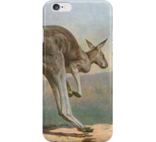 Great Grey Kangaroo leaping circa 1900 iPhone Case/Skin
