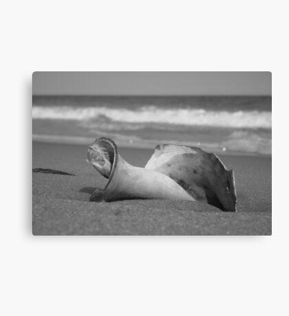 Ocean Gifts Canvas Print