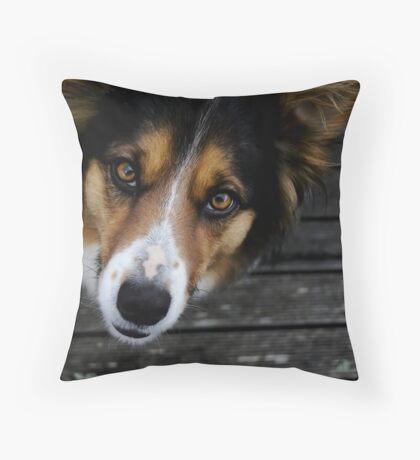 Australian Sheperd Throw Pillow