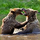 grizzly embrace by MikeJagendorf