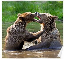 grizzly embrace Poster
