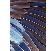 Feathers #110 Photographic Print