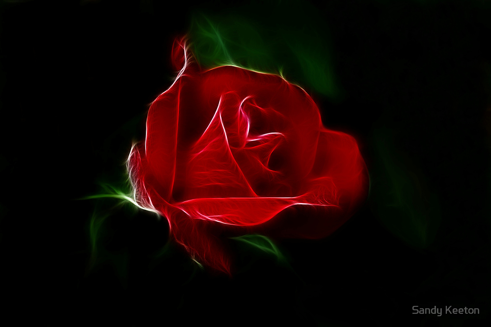 Red Rose  by Sandy Keeton