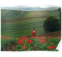 Tulips in bloom, Dandenong Ranges, Australia Poster