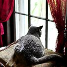 window cat by MikeJagendorf
