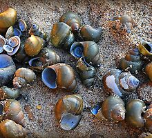 Shells on the Shore by Jane Brack