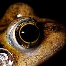 common frog (rana temporaria) by Simon Hackney