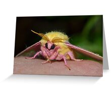 A Stunning Visitor Greeting Card
