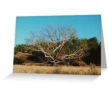 AZ. Cottonwood ? Greeting Card