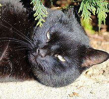 Blacky The Cat by rumisw