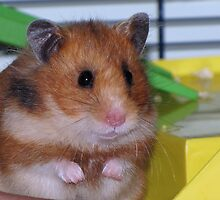 The Hamster by Sharon Perrett
