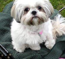 Maisie at archery  by ANNIESUNSHINE