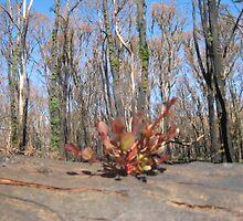 Sarah's Bushfire rejuvenation image 4 by sarahmacsmiles