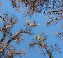 Sarah's Bushfire rejuvenation image 7 by sarahmacsmiles