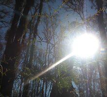 Sarah's Bushfire rejuvenation image 10 by sarahmacsmiles