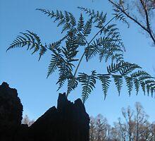 Sarah's Bushfire rejuvenation image 13 by sarahmacsmiles
