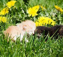Two kittens by Artur Mroszczyk