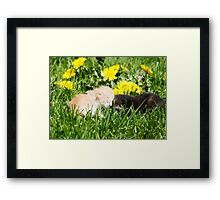 Two kittens Framed Print