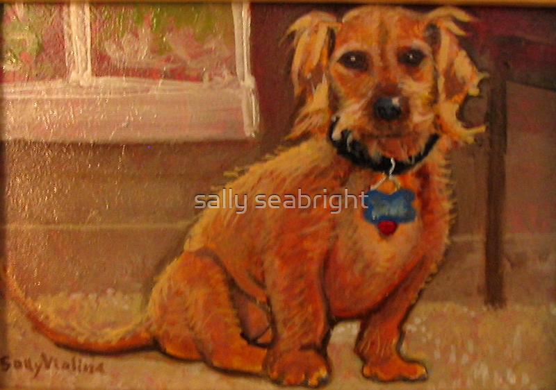 Poco by sally seabright