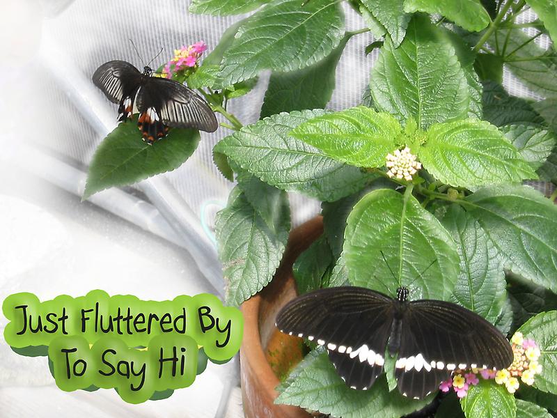 Just Fluttered By to Say Hi by L J Fraser