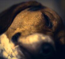 Courage the Beagle Portrait - 5 by RHeavenridge