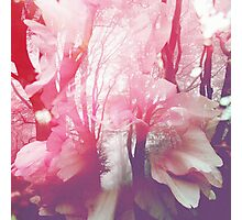 Blossoming Beeches Photographic Print