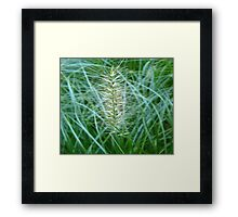 Flowering Grass Spike Framed Print