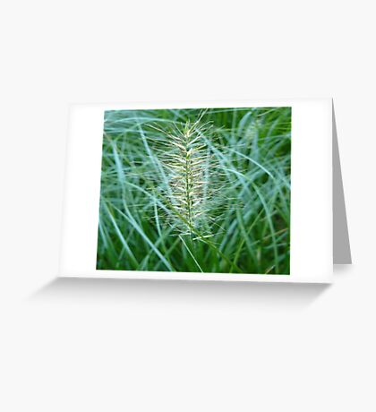 Flowering Grass Spike Greeting Card