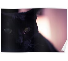 Neo the Black Cat - Portrait - 1 Poster