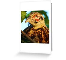pheasant's face & features Greeting Card