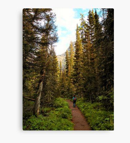 Forest near St. Mary Falls - Glacier National Park, Montana, USA Canvas Print
