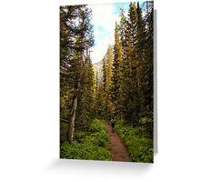Forest near St. Mary Falls - Glacier National Park, Montana, USA Greeting Card