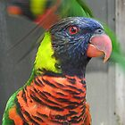 Introducing Mr Rainbow Lorikeet by Bellavista2