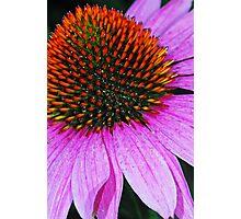 Rainbow Cone Flower Photographic Print