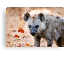 YEAH, I AM WATCHING YOU! - Spotted Hyaena - Crocuta crocuta Canvas Print