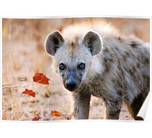 YEAH, I AM WATCHING YOU! - Spotted Hyaena - Crocuta crocuta Poster
