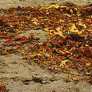 Seaweed Tagliatelle by lhyland