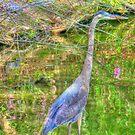 Blue Heron by mrthink