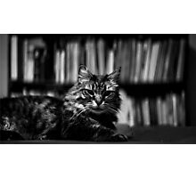 James the Cat - Portrait - 1 Photographic Print