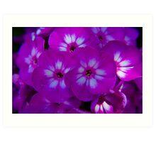 Purple Bundle Art Print