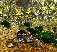 Crabs by Havoc