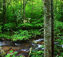 OCONALUFTEE RIVER by Chuck Wickham