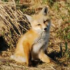 Red Fox Kit by Ron Kube