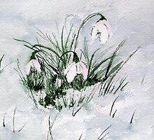 Snowdrops by katymckay